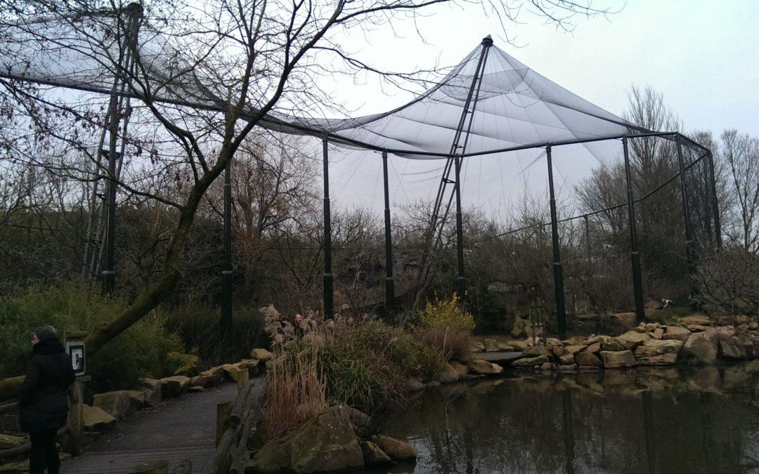 Diergaarde Blijdorp – Weidevogel voliere