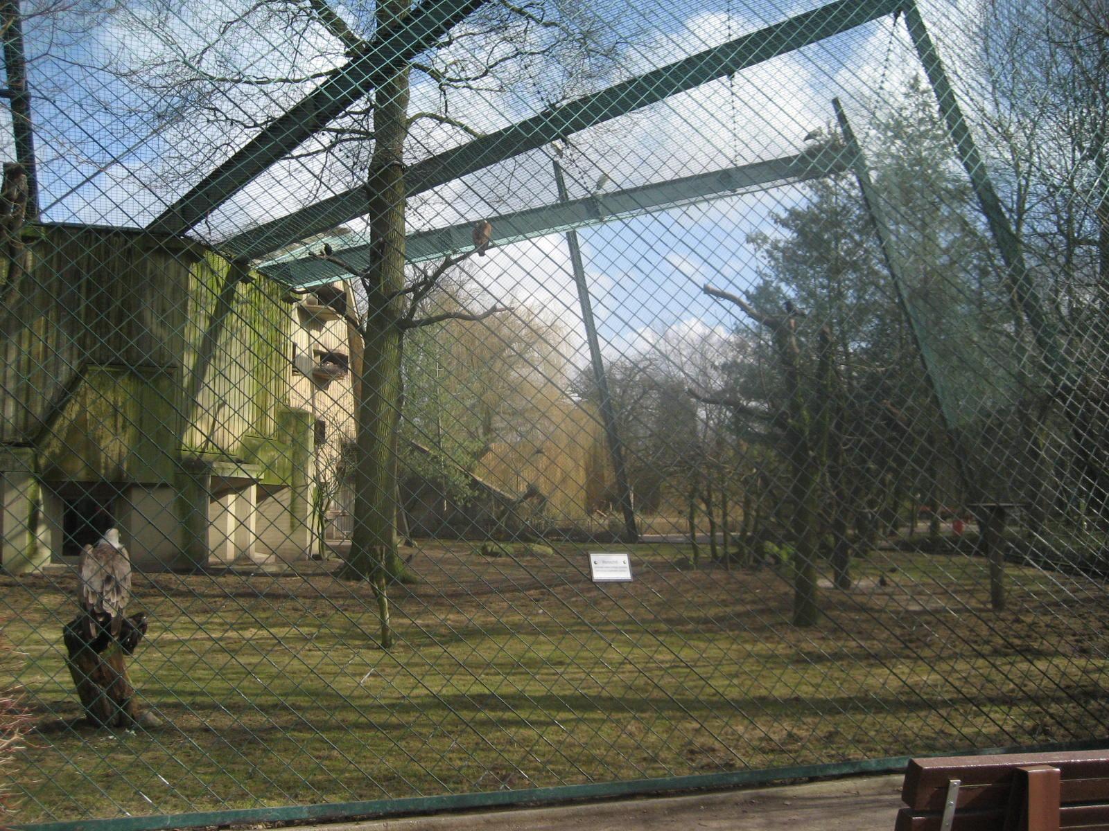 Allwetterzoo Munster - Geiervoliere  (4)