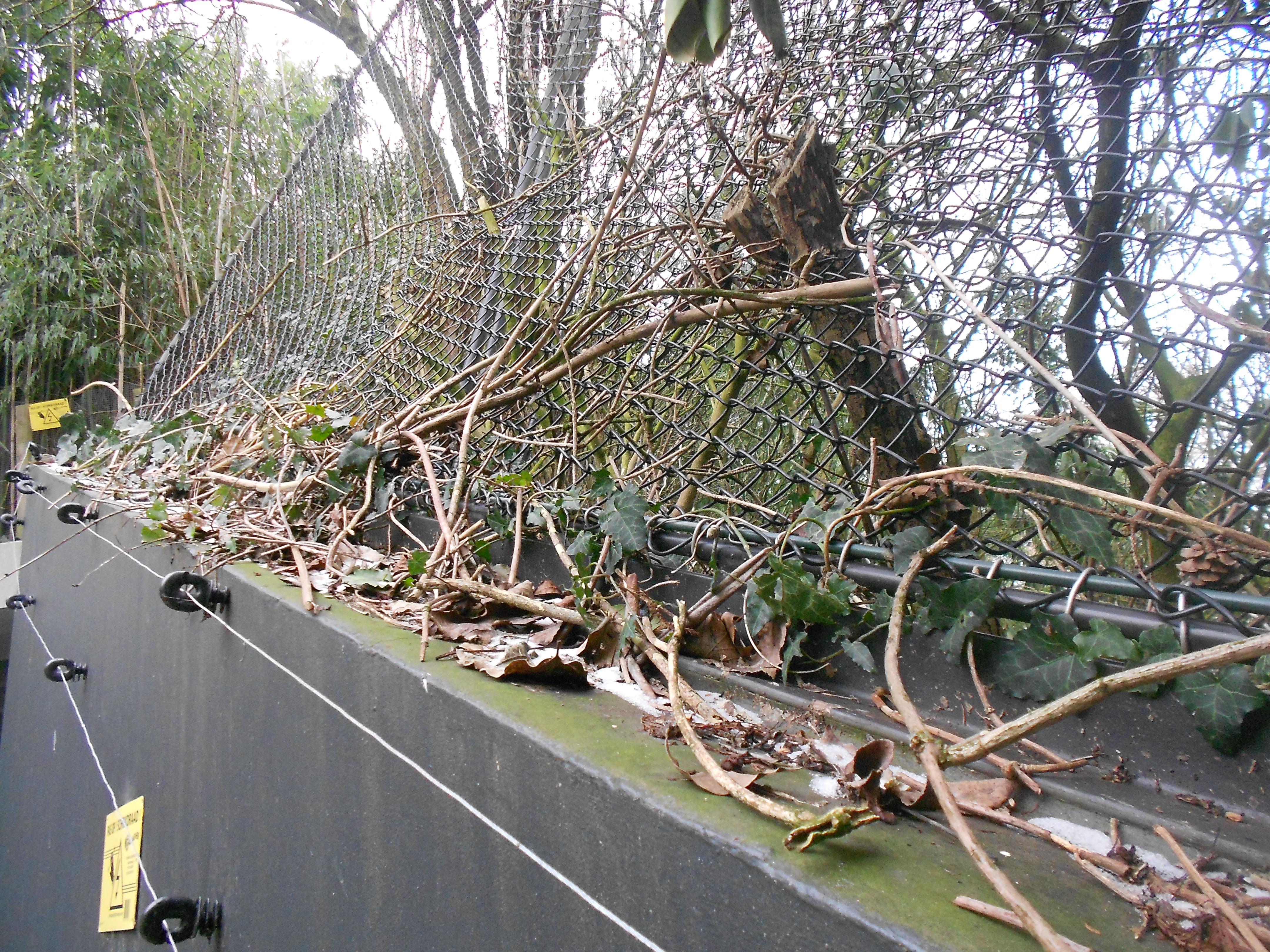 Dierenpark Emmen - American Free-flight aviary (1)