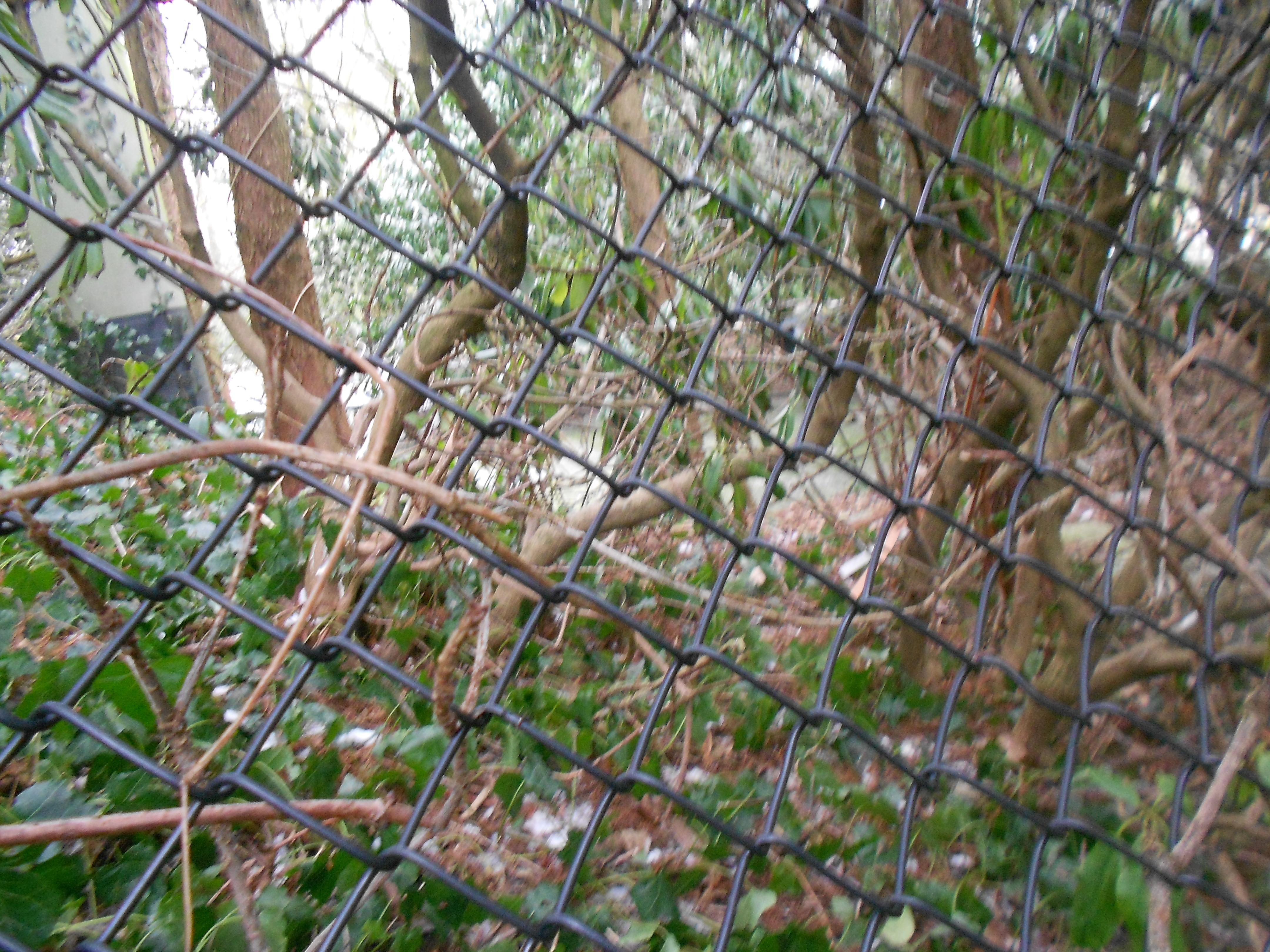 Dierenpark Emmen - American Free-flight aviary (3)