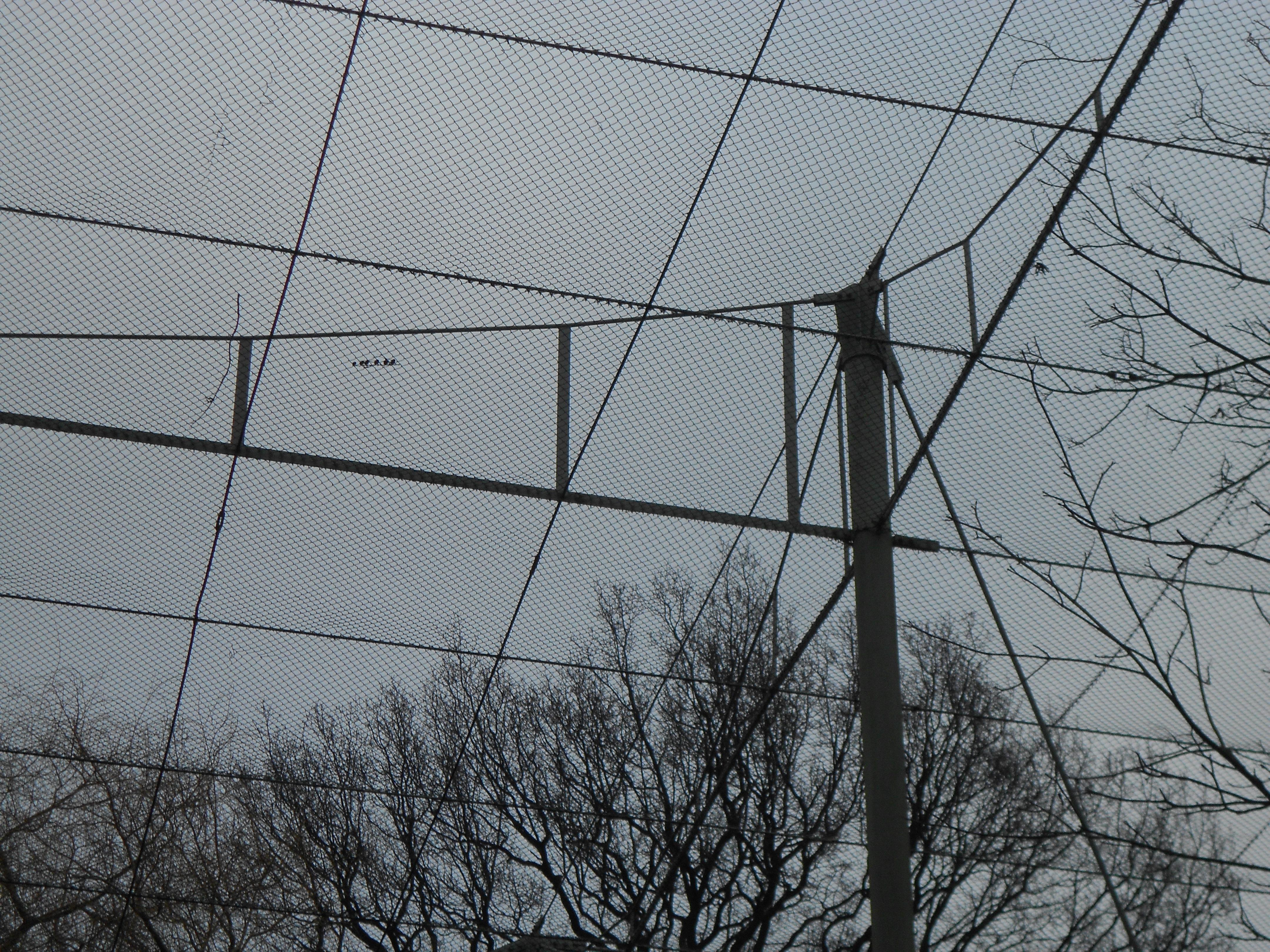 Dierenpark Emmen - American Free-flight aviary(4)