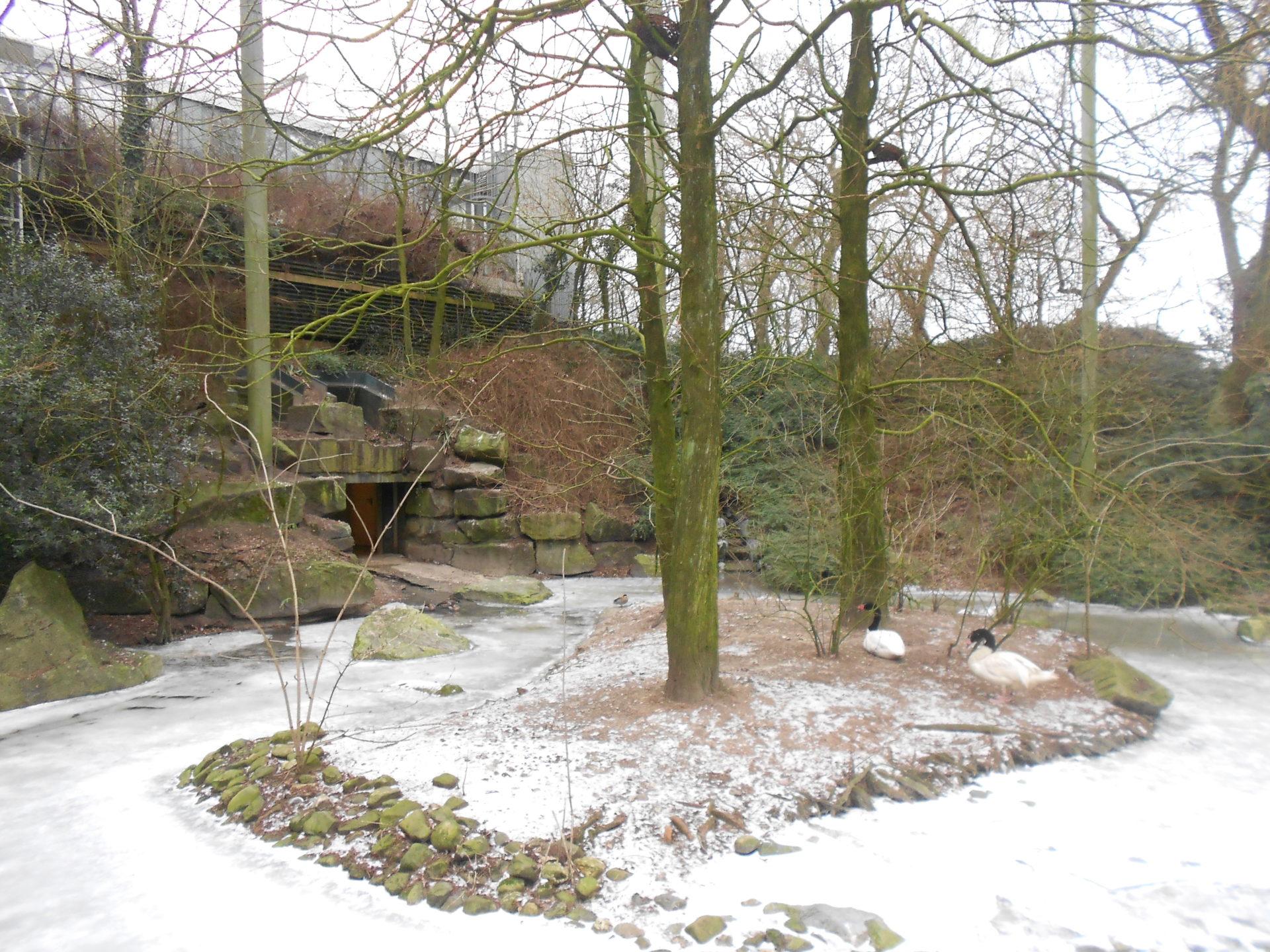 Dierenpark Emmen - American Free-flight aviary (9)