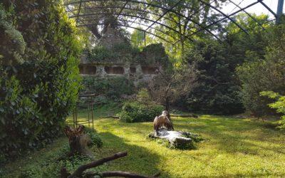 Zoo Zagreb – Vulture aviary